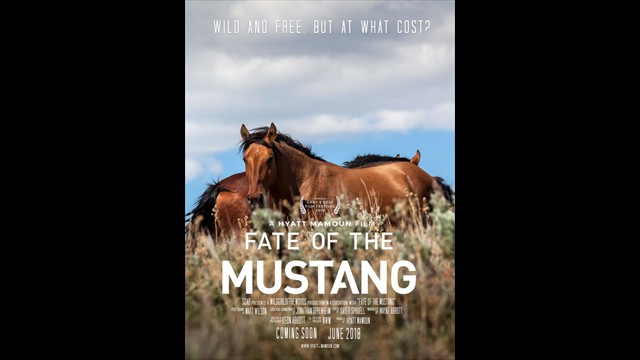 Fate of the Mustang
